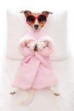 Posa di yoga del cane Immagine Stock Libera da Diritti
