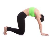 Posa di yoga del gatto Fotografie Stock