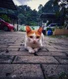 Posa sveglia del gatto che si siede sulla terra che guarda qualcosa Fotografia Stock Libera da Diritti
