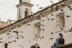 Posatoio dei piccioni Fotografia Stock Libera da Diritti