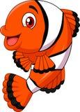 Pose adorable de poissons de clown d'isolement sur le fond blanc Images stock