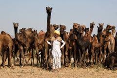 Pose avec le chameau Photos stock
