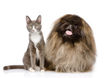 Pose de chat et de chien D'isolement sur le fond blanc Photos stock