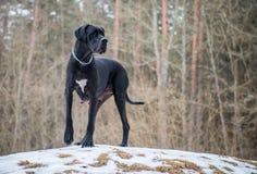 Pose de chien Images libres de droits