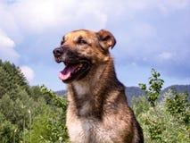 Pose de chien Photographie stock