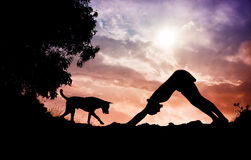 Pose de chien de yoga Photos libres de droits