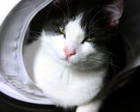 Pose de Kitty Images libres de droits
