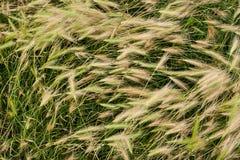 Pose de l'herbe Photo stock