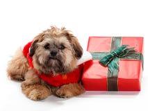 Pose de Noël Shi Poo Photographie stock libre de droits