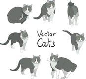 Pose dei gatti fissate Fotografia Stock