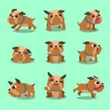 Pose del bulldog del personaggio dei cartoni animati Immagini Stock Libere da Diritti