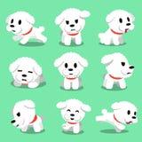 Pose del cane del frise del bichon del personaggio dei cartoni animati Fotografia Stock