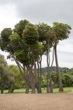Pose des arbres images libres de droits