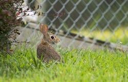 Pose do coelho Fotos de Stock
