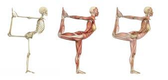 Pose do dançarino da ioga - folhas de prova anatômicas ilustração royalty free