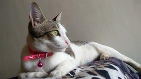 Pose do gato Foto de Stock Royalty Free