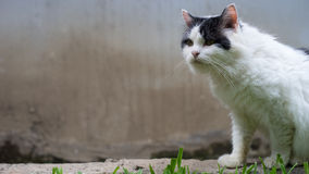 A pose do gato fotografia de stock royalty free
