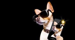 Pose du chien avec des lunettes de soleil Images stock