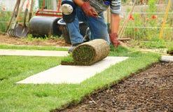 Pose du gazon pour la pelouse neuve Image stock