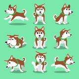 Pose marroni del cane del husky siberiano del personaggio dei cartoni animati Fotografie Stock Libere da Diritti
