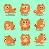 Pose pomeranian del cane del personaggio dei cartoni animati Fotografia Stock
