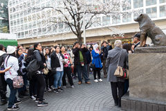 Pose sur la statue de Hachiko Photos stock