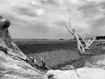 Sardegna sardinia beach italy. Poseidonia on beach of stock photo