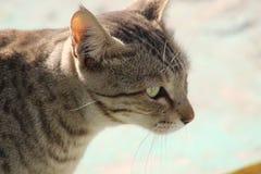 Posera av l?s katt i ram med en skjuten klick fotografering för bildbyråer