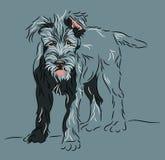 posera den plattform wolfhounden för valpen Royaltyfria Bilder