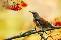 Posera en fågel Royaltyfria Bilder