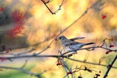 Posera en fågel Arkivbilder