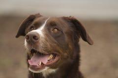 Posera för hund Arkivfoto