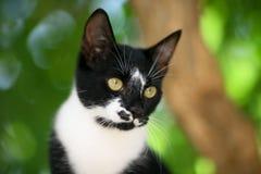 posera för katt Royaltyfria Foton
