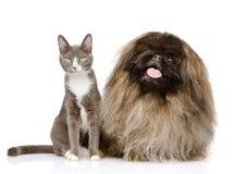 Posera för katt och för hund bakgrund isolerad white Arkivfoton
