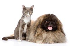Posera för katt och för hund bakgrund isolerad white Royaltyfri Bild