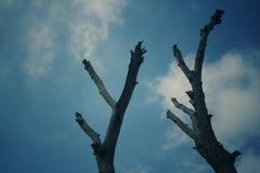 Posera för träd arkivbild