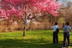 Posera i de körsbärsröda träden Fotografering för Bildbyråer