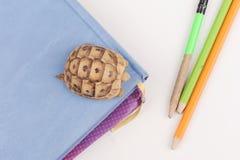 Posera serie för sköldpadda Arkivbilder