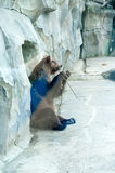 poserar brunt roligt för björn arkivfoto
