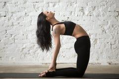 Poserar den attraktiva kvinnan för ung yogi i kamel, vit vindbakgrund Royaltyfri Bild