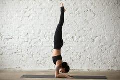 Poserar den attraktiva kvinnan för ung yogi i Pincha Mayurasana, vindbaksida arkivbilder