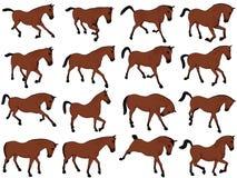 Poses Assorted cavalo dos desenhos animados Imagens de Stock