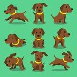 Poses brunes de chien de Labrador de personnage de dessin animé illustration stock