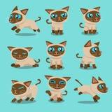 Poses do gato siamese do personagem de banda desenhada Foto de Stock