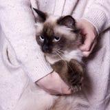 Poses mascaraing do gato de Nevsky Imagens de Stock Royalty Free