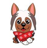 Poseur anglais de chiot de chien Le chien rouge gai avec une écharpe se repose illustration stock