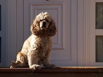 Posh dog. At algorta Stock Photo