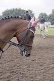 posh häst Royaltyfri Fotografi