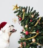 Posição adorável do cachorrinho do buldogue ao lado de uma árvore de Natal fotos de stock