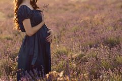 Posição de cabelos compridos da mulher gravida em um dia ensolarado em um campo da alfazema com um ramalhete da alfazema imagens de stock